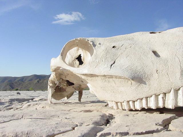 CF149: Dry Bones